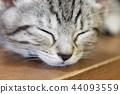 蜡肠猫 小猫 猫咪 44093559