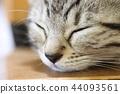 蠟腸貓 小貓 貓咪 44093561