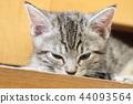 蜡肠猫 小猫 猫咪 44093564
