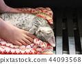 蜡肠猫 小猫 猫咪 44093568
