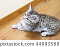 蜡肠猫 小猫 猫咪 44093569