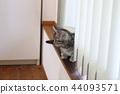 蜡肠猫 小猫 猫咪 44093571