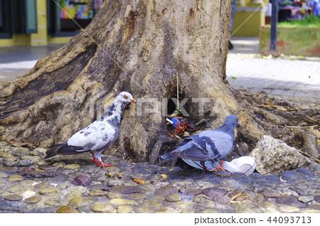 拜拜的鴿子 44093713