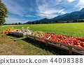 Harvest of Pumpkins - Bavaria Germany 44098388