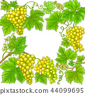 grapes vector frame 44099695