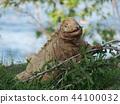 動物 爬行動物 爬蟲類的 44100032