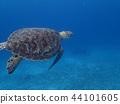기분 좋게 수영 거북 수중 사진 수중 사진 44101605
