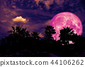 full pink moon back silhouette palm in dark night 44106262