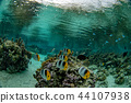 snorkeling in french polynesia coral reef gardens 44107938