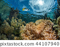 snorkeling in french polynesia coral reef gardens 44107940