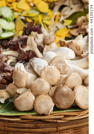 Pleurotus eryngii  mushroom (king oyster mushroom) 44109134