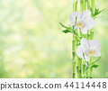 Bamboo and two orchid flowers on white background 44114448
