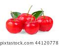 Barbados cherry, Malpighia emarginata 44120778
