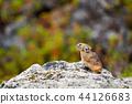 야생 동물, 들짐승, 동물 44126683