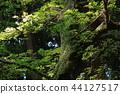 숲의 나무 44127517
