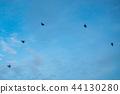 에어쇼 전투기 편대 비행 44130280