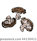Shiitake hand-drawn illustration 44130411