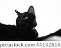 black cat, cute, blank expression 44132614