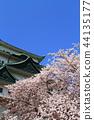 봄의 나고야 성 (만개의 벚꽃) 44135177