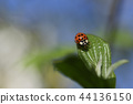 Ladybug in the spring 44136150