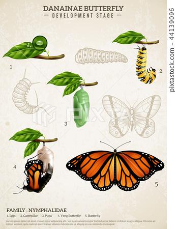 Danainae Butterfly Retro Poster 44139096