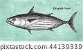 fish,sketch,skipjack 44139339