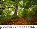 Beautiful autumn landscape 44139663