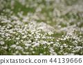 White spring flowers 44139666