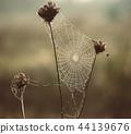 Autumn dry plant 44139676