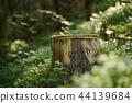 North scandinavian forest 44139684