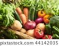 收集新鮮蔬菜 44142035