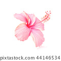 Flowers on a white background. 44146534