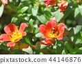 뽀츄라카 (꽃 미끄럼 비유) 44146876