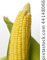 organic ear of corn on a white 44148066