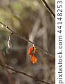 겨울, 고엽, 마른 잎 44148253
