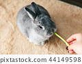 Rabbit snack eat 44149598