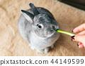 토끼, 먹다, 사육 44149599