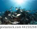 물고기, 생선, 물고기 떼 44150268
