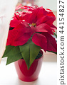 Poinsettia in natural light on a light window 44154827