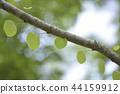 하트 잎 44159912