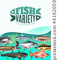 Fish Variety Illustration 44162059