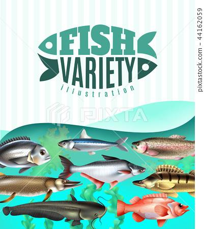 Fish Variety Illustration 44162059