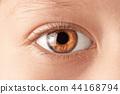 Child's eyes 44168794