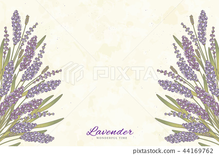 Engraved lavender flowers 44169762