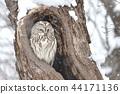 Ezo Owl 44171136