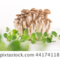 brown beech mushroom on white wooden background. 44174118