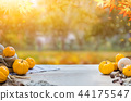 Harvest and Thanksgiving with fruit and vegetable 44175547