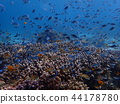 branch coral, coral, diving 44178780