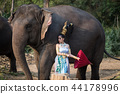 Thai girl with elephant 44178996