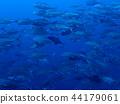 bigeye trevally, diving, bevy 44179061